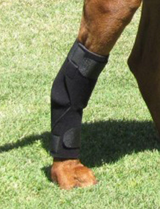 Holistic Pet Tarsal Support