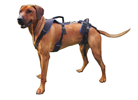 Holistic Pet Harness Dog